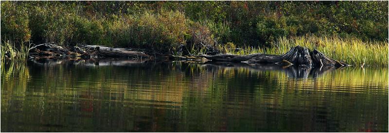 Adirondacks Cedar River Flow September 2015  Shoreline 4