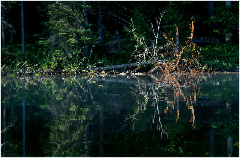 Adirondacks Moose River Shore 18 July 2016
