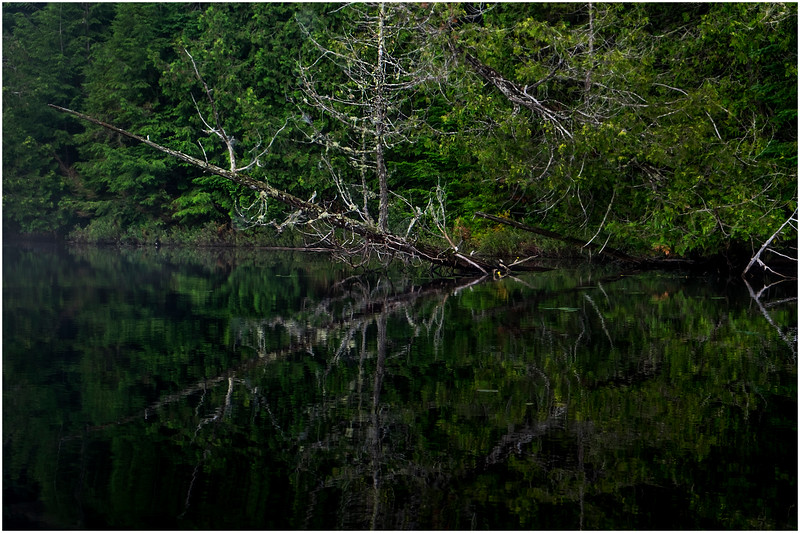 Adirondacks Newcomb Lake Shore Detail 27 July 2017