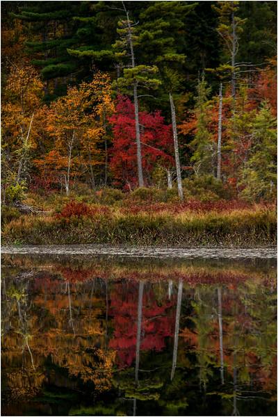 Adirondacks Whitney Wilderness Round Lake Shoreline 3 September 2013