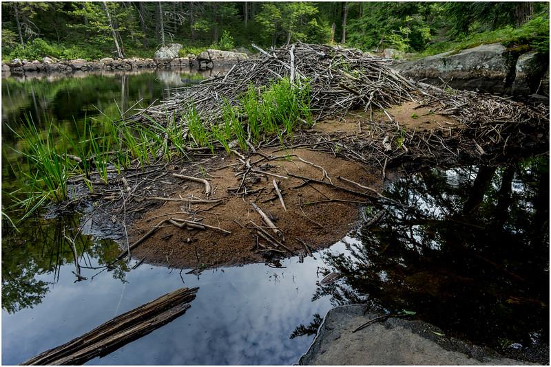 Adirondacks Round Lake Whitney Wilderness Outlet Stream 1 July 2016