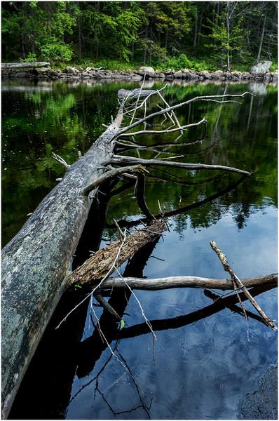 Adirondacks Round Lake Whitney Wilderness Outlet Stream 2 July 2016