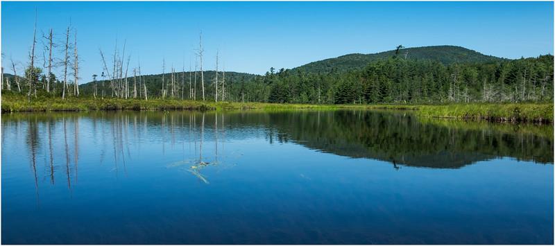 Adirondacks Forked Lake Wetlands Shoreline 4 July 2017
