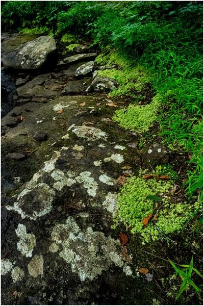 Adirondacks Round Lake Whitney Wilderness Outlet Stream 4 July 2016