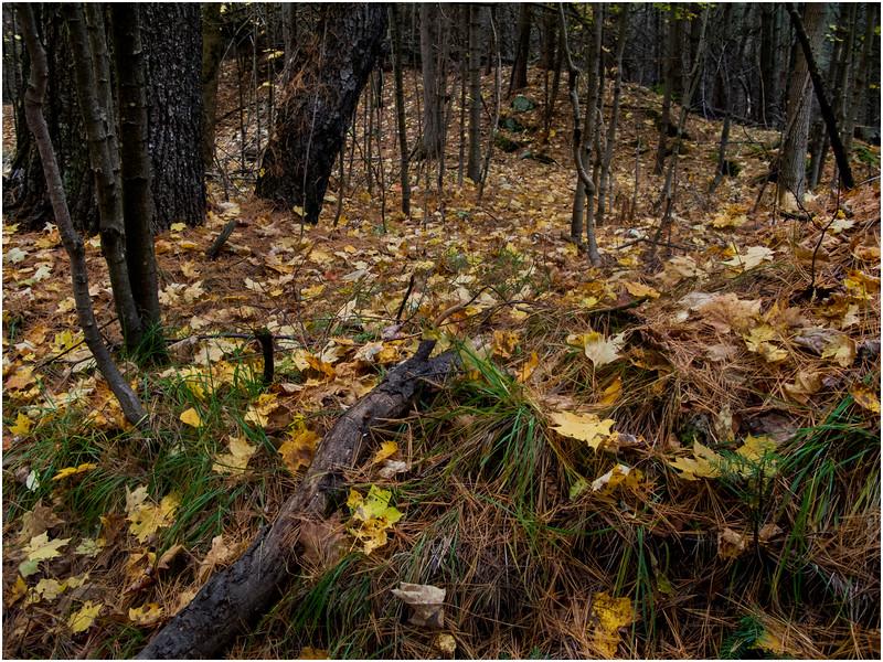 Adirondacks Saranac Woods 2 October 2009