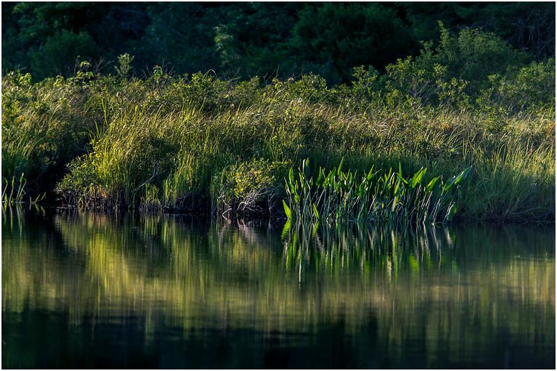 Adirondacks Forked Lake Wetlands Shoreline 6 July 2017