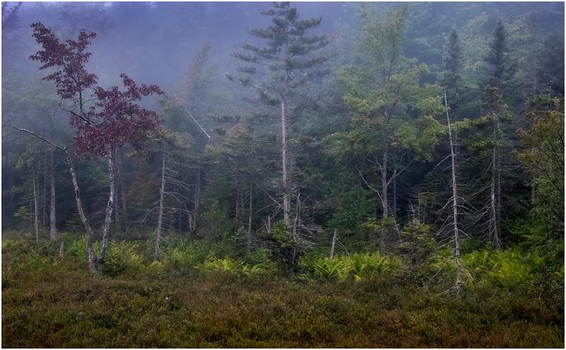 Adirondacks Cary Lake Morning Mist 59 September 2017