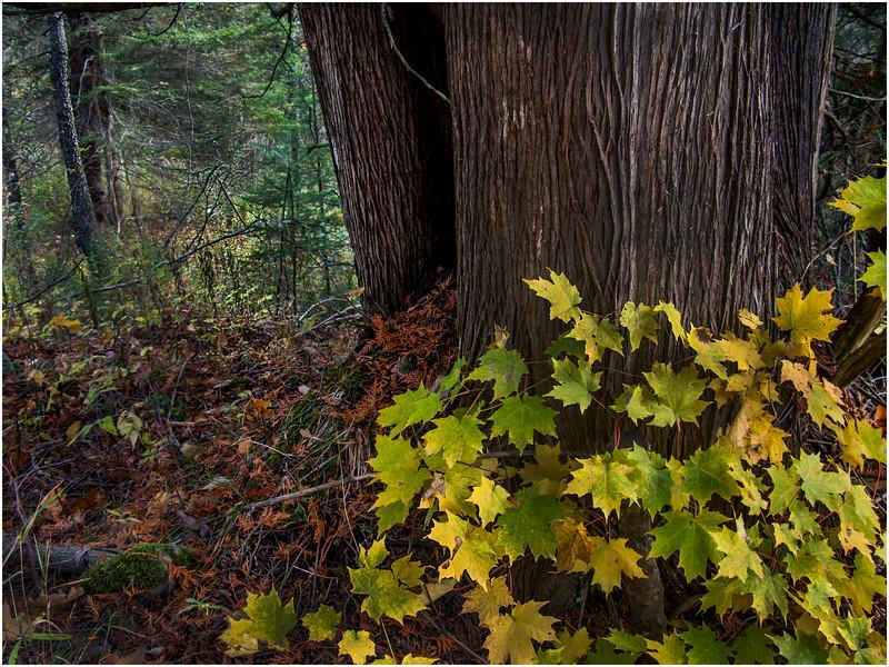 Adirondacks Saranac Woods 3 October 2009