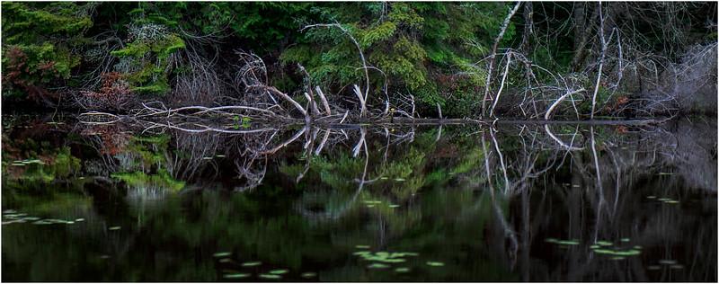 Adirondacks Newcomb Lake Shore Detail 11 July 2017