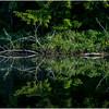 Adirondacks Moose River Shore 17 July 2016