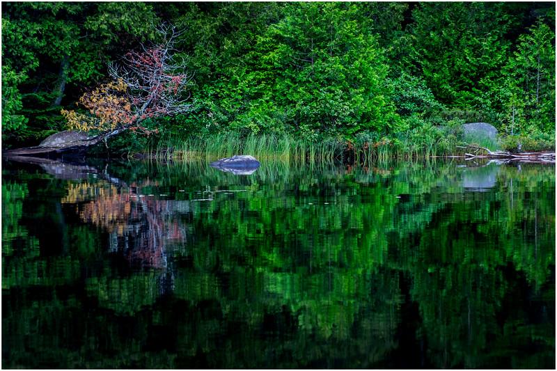 Adirondacks Newcomb Lake Shore Detail 5 July 2017