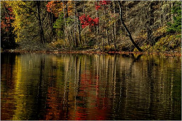 Adirondacks Lake Abanakee October 2015 Shoreline 7