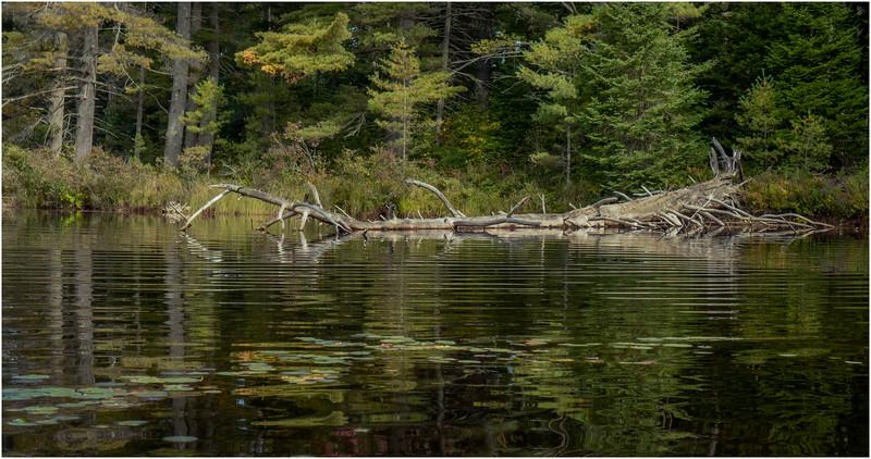Adirondacks Bog River 8 September 2019