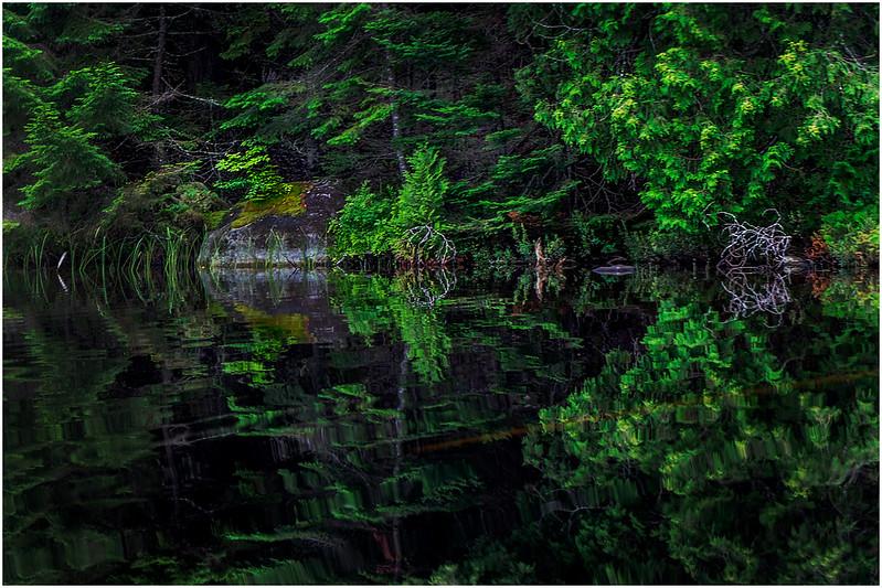 Adirondacks Newcomb Lake Shore Detail 13 July 2017