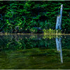 Adirondacks Moose River Shore 28 July 2016