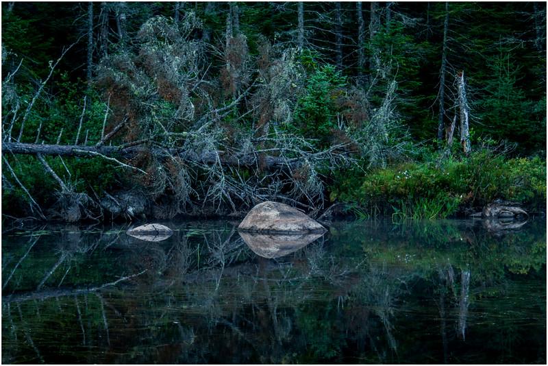 Adirondacks Forked Lake North Bay Inlet Shoreline 2 August 2016