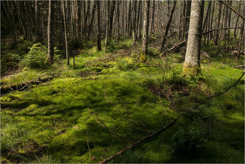 Adirondacks July 2015 Grassy Pond Trail Sphagnum Moss 5