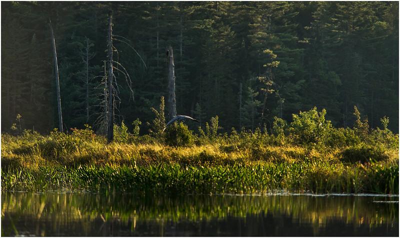 Adirondacks Forked Lake Wetlands Shoreline 8 July 2017