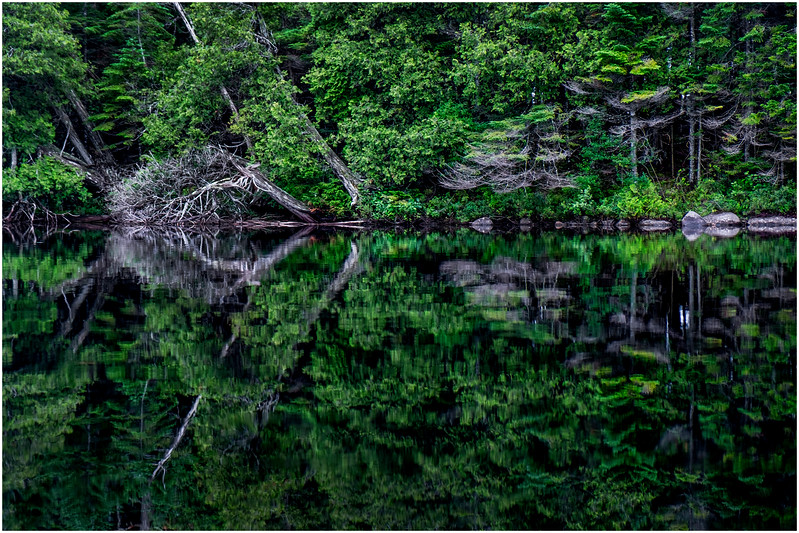 Adirondacks Newcomb Lake Shore Detail 8 July 2017