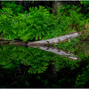 Adirondacks Newcomb Lake Shore Detail 36 July 2017