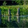 Adirondacks Moose River Shore 11 July 2016