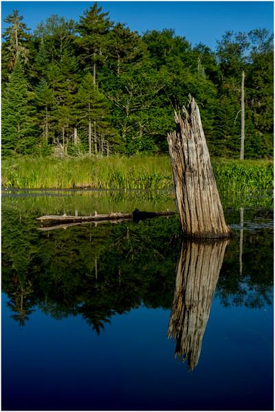 Adirondacks Moose River Shore 12 July 2016