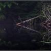 Adirondacks Newcomb Lake Shore Detail 17 July 2017