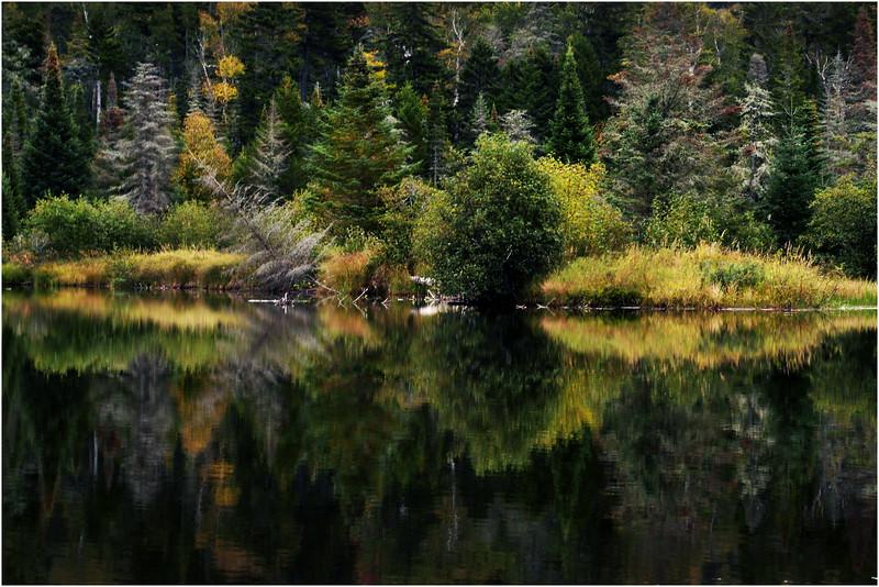 Adirondacks Cedar River Flow September 2015  Shoreline 12