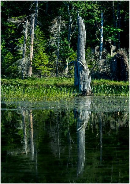 Adirondacks Moose River Shore 29 July 2016