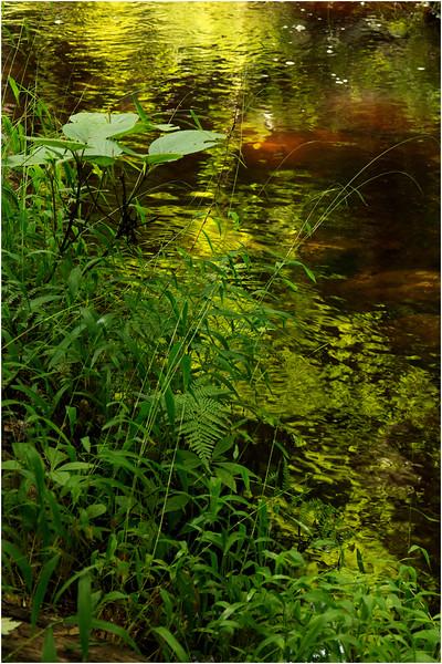 Adirondacks Utowana Tributary Boulders and Stream 19 July 2012