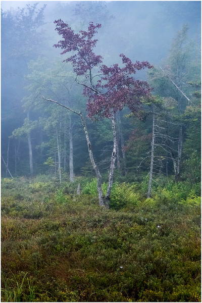 Adirondacks Cary Lake Morning Mist 60 September 2017