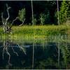Adirondacks Moose River Shore 8 July 2016