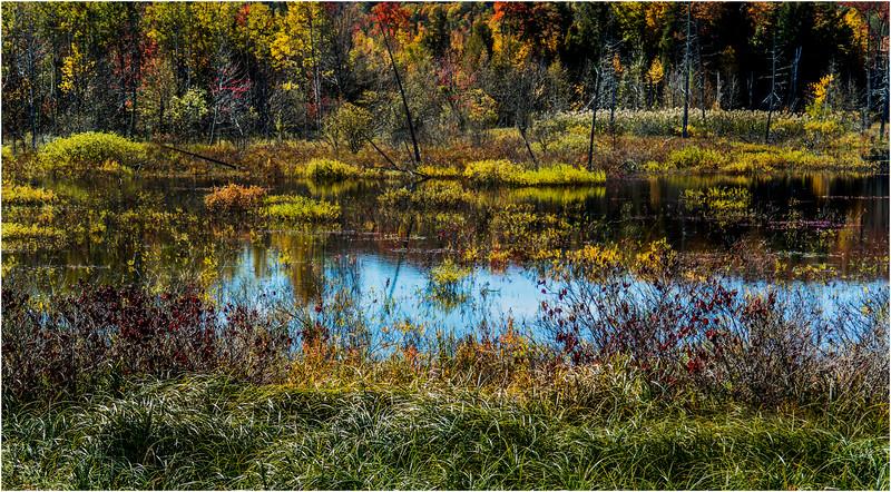 Adirondacks Chestertown October 2015 Wetlands Above Exit 25 6