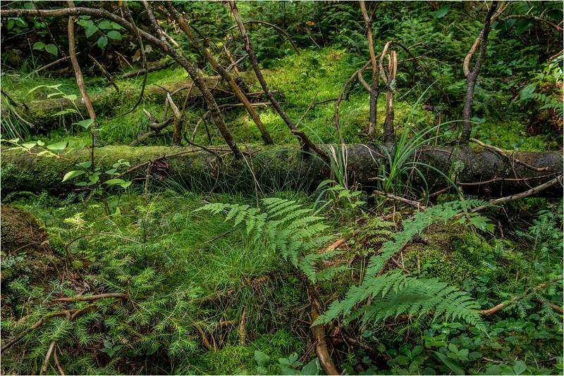 Adirondacks July 2015 Grassy Pond Trail Woods 2