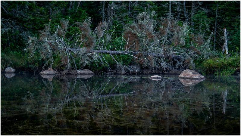 Adirondacks Forked Lake North Bay Inlet Shoreline 1 August 2016