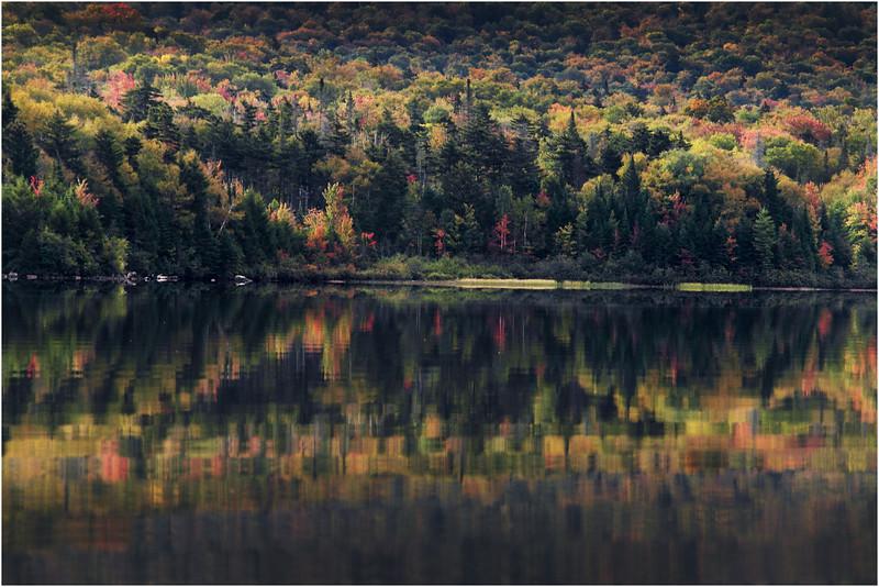 Adirondacks Cedar River Flow September 2015  Shoreline 6