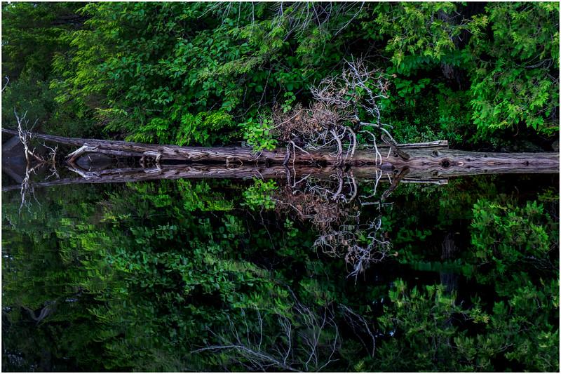 Adirondacks Newcomb Lake Shore Detail 6 July 2017