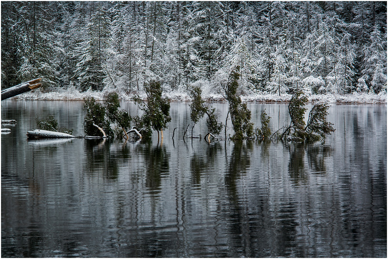 Adirondacks Follensby Clear Pond with Deadfall 1 December 2016