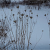 Adirondacks Newcomb Last Years Queen Annes Lace March 2018