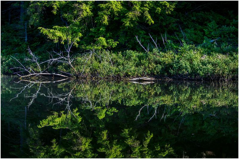 Adirondacks Moose River Shore 27 July 2016
