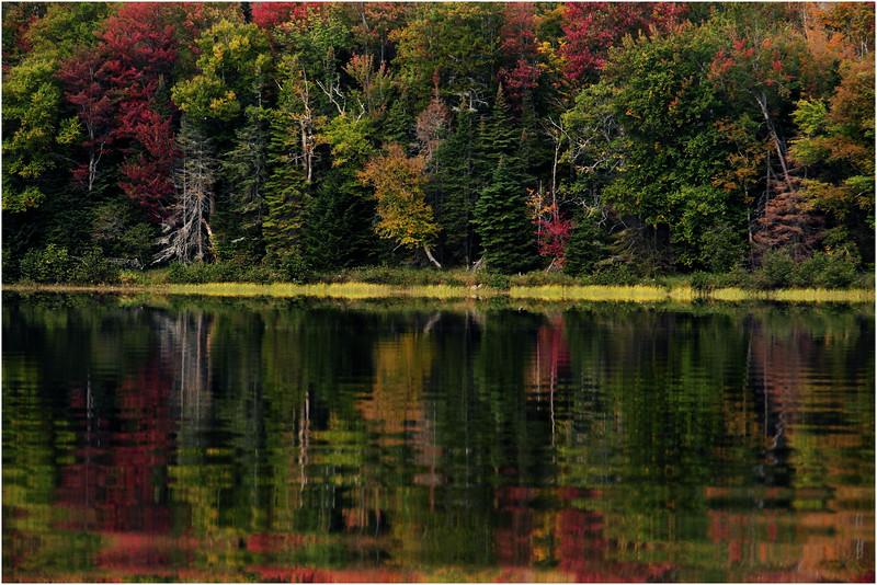 Adirondacks Cedar River Flow September 2015  Shoreline 10