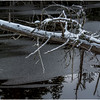 Adirondacks Saranac Lake Tributary 5 December 2016