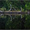Adirondacks Newcomb Lake Shore Detail 25 July 2017