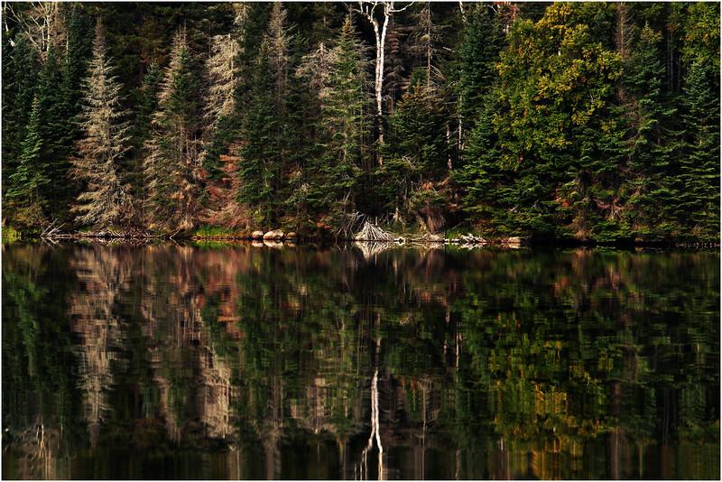 Adirondacks Cedar River Flow September 2015  Shoreline 3
