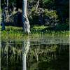 Adirondacks Moose River Shore 30 July 2016