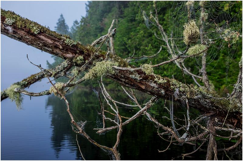 Adirondacks Newcomb Lake Deadfall with Moss 1 July 2017