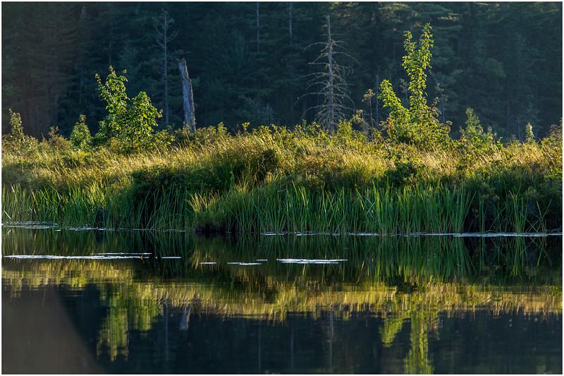 Adirondacks Forked Lake Wetlands Shoreline 10 July 2017