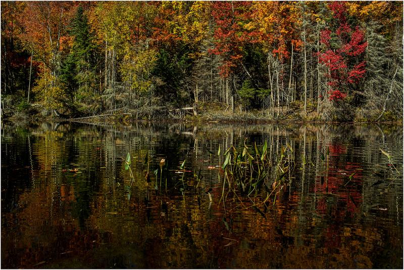 Adirondacks Lake Abanakee October 2015 Shoreline 14