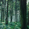 Adirondacks Classics Northville Placid Trail near Cedar Lakes circa 1995
