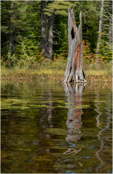 Adirondacks Bog River 39 September 2019